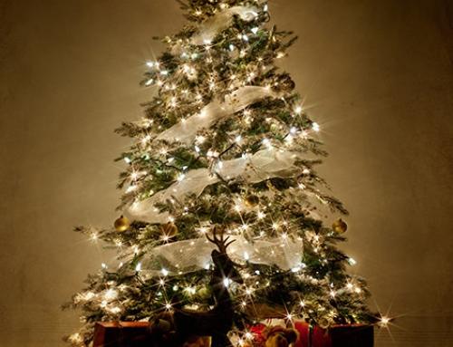 Commander sapin de Noël en ligne